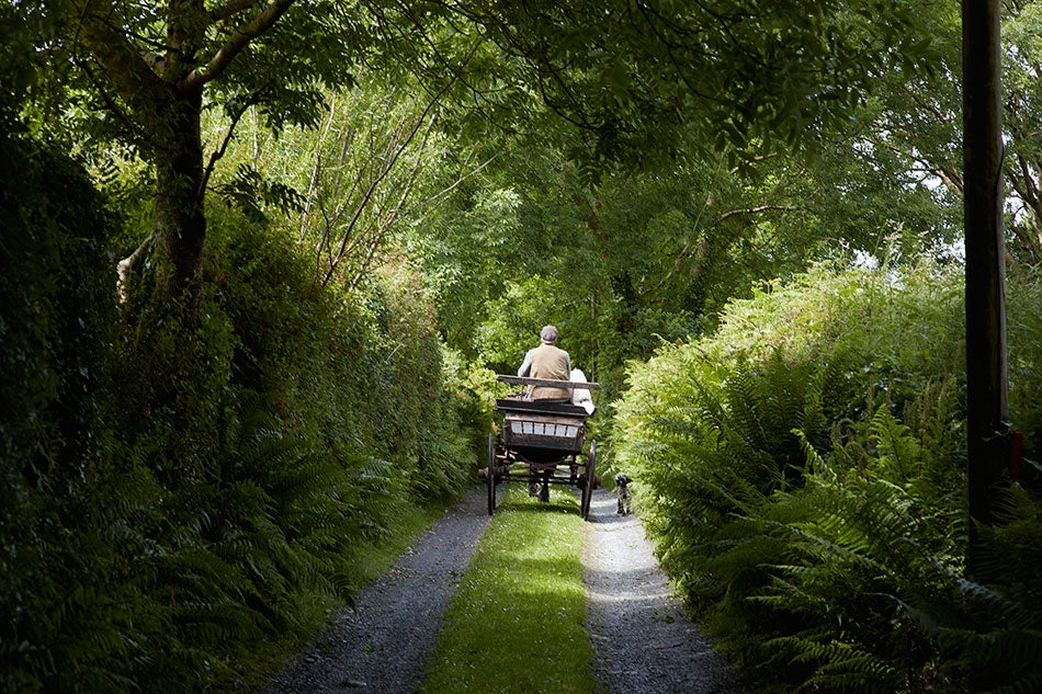 Jeremy Irons and his dog Smudge ride in a carriage on the property around the castle.